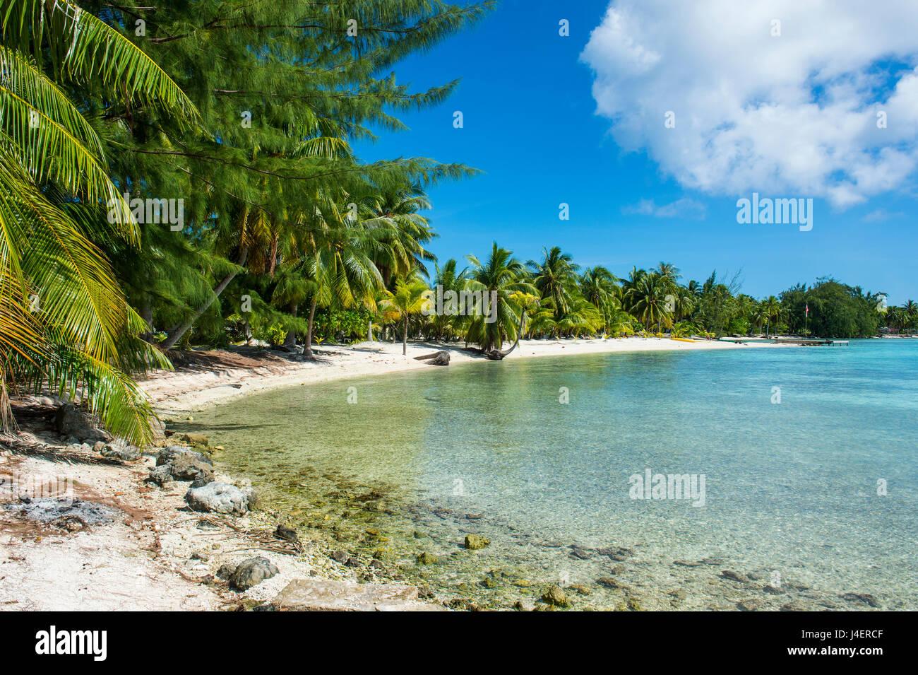 Beautiful palm fringed white sand beach in the turquoise waters of Tikehau, Tuamotus, French Polynesia, Pacific Stock Photo