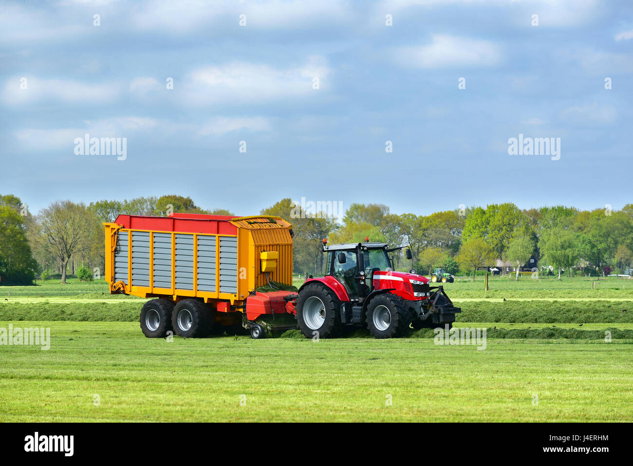 Tractor and a Self-loading and harvester-filled forage wagon collecting mowed grass. - Stock Image