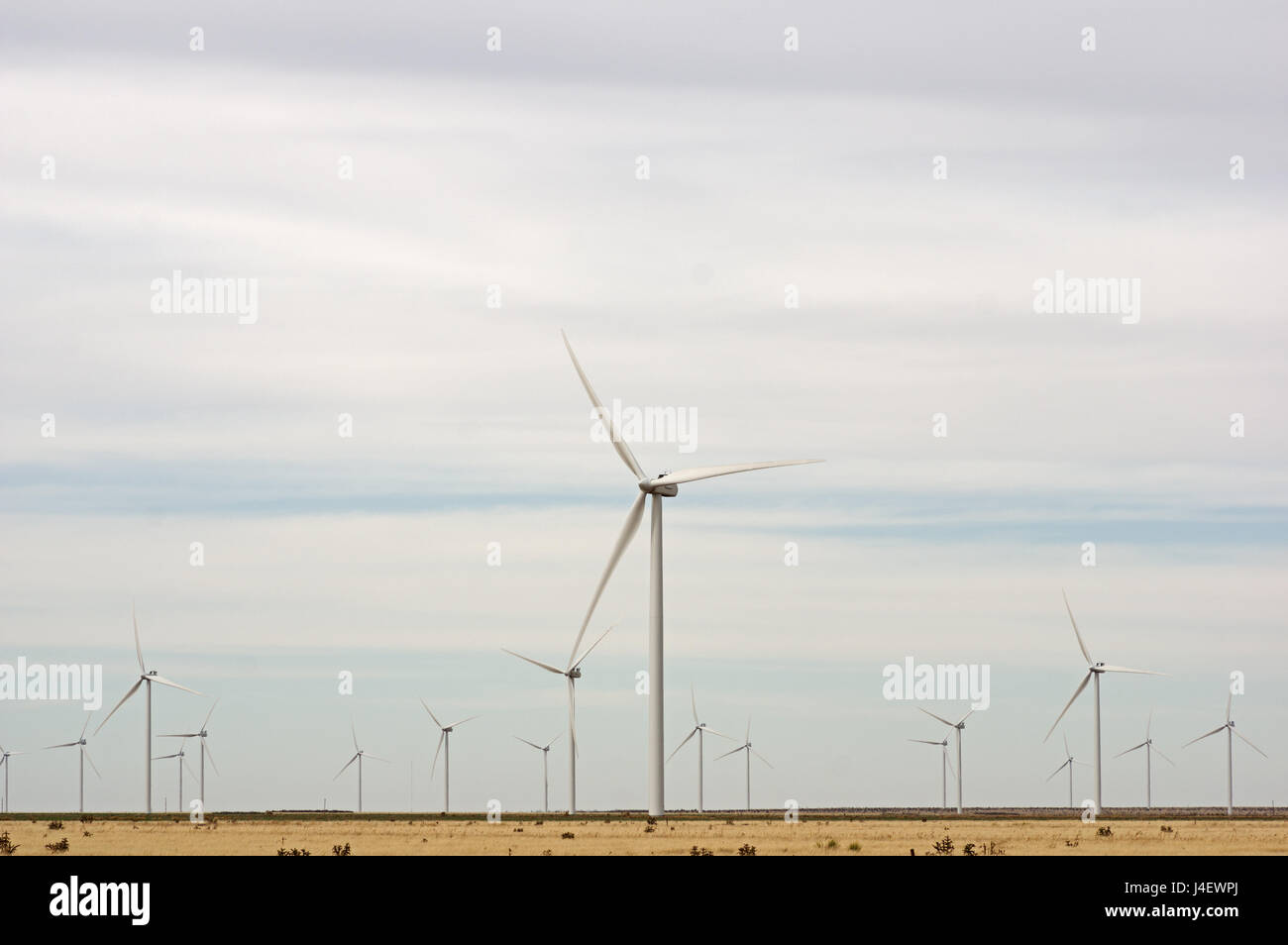 a west Texas field of wind turbines providing renewable energy - Stock Image