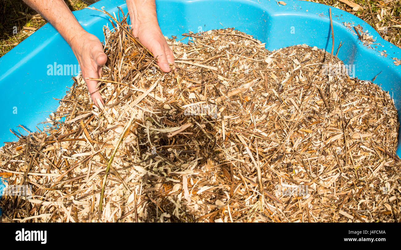 Pair of hands holds wood chips lying in a blue plastic tub Stock ...