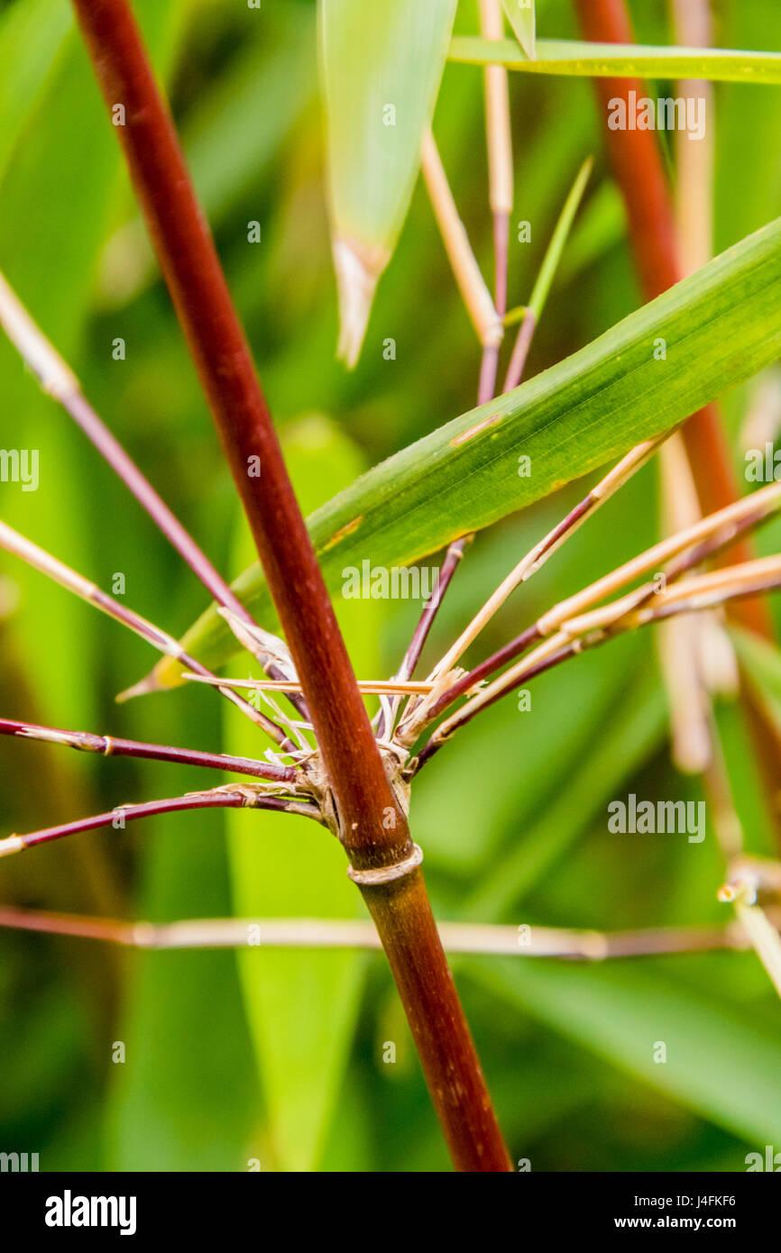 Bamboo Broom Stock Photos Amp Bamboo Broom Stock Images Alamy