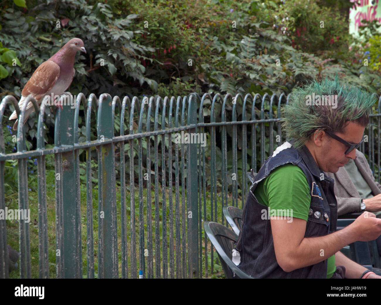 A pigeon watches over a man with green hair in Pavilion Gardens, Brighton - Stock Image