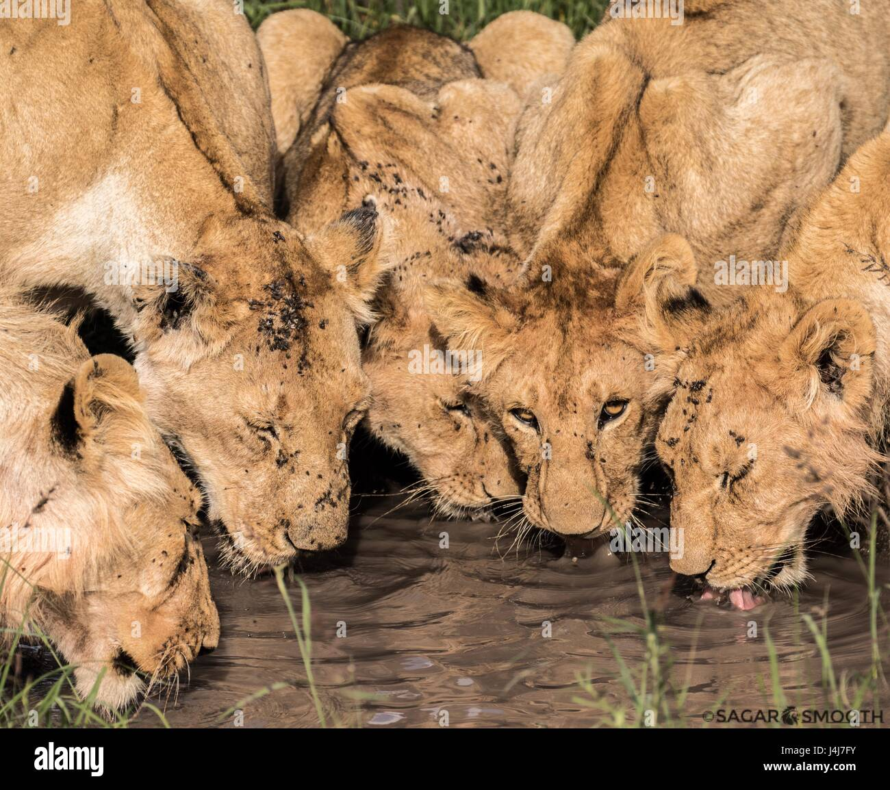 Beautiful African Wildlife - Stock Image
