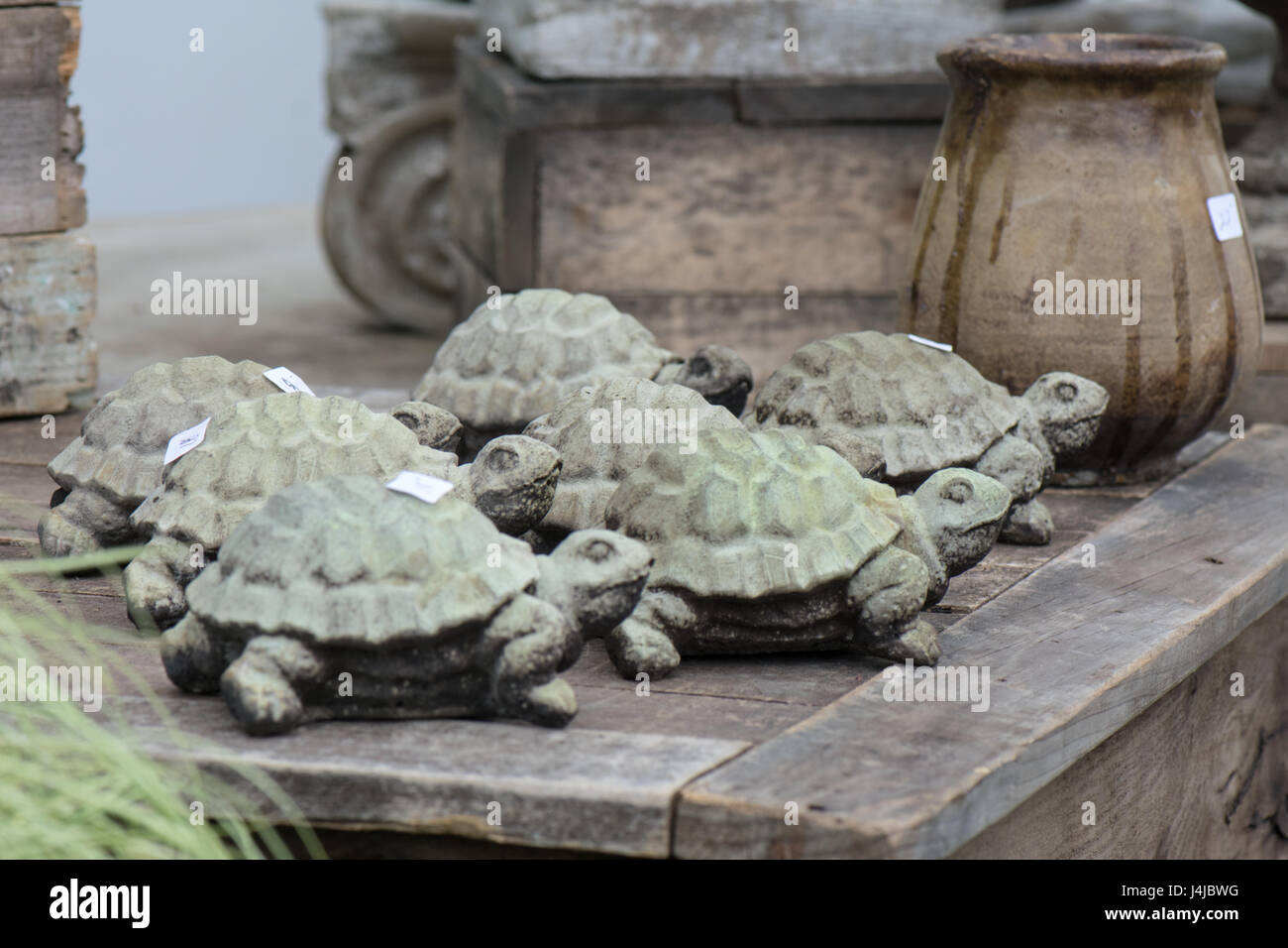 Slow and steady wins the race with this group of turtles. - Stock Image