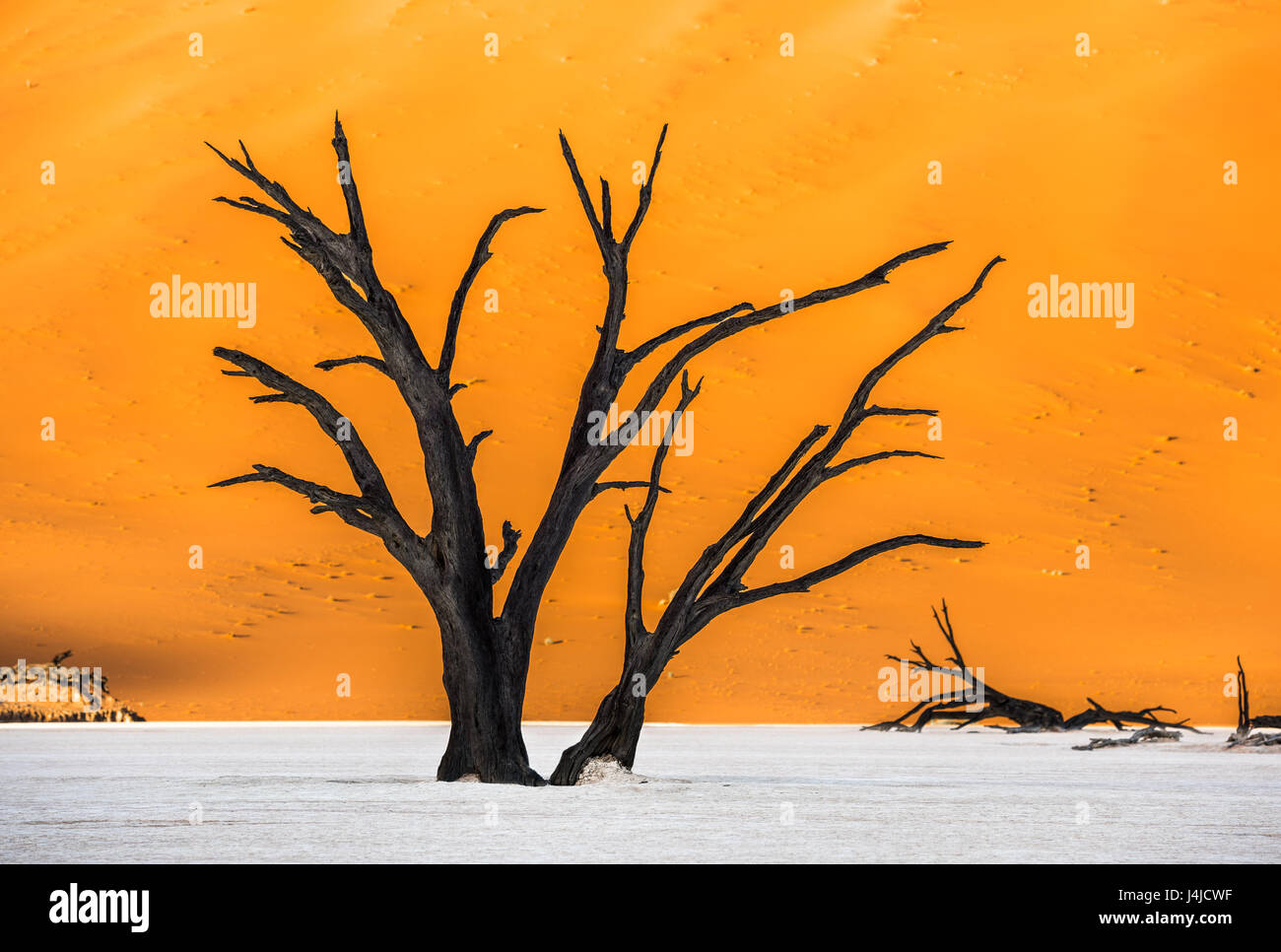 Dead Camelthorn Trees and red dunes in Deadvlei, Sossusvlei, Namib-Naukluft National Park, Namibia - Stock Image
