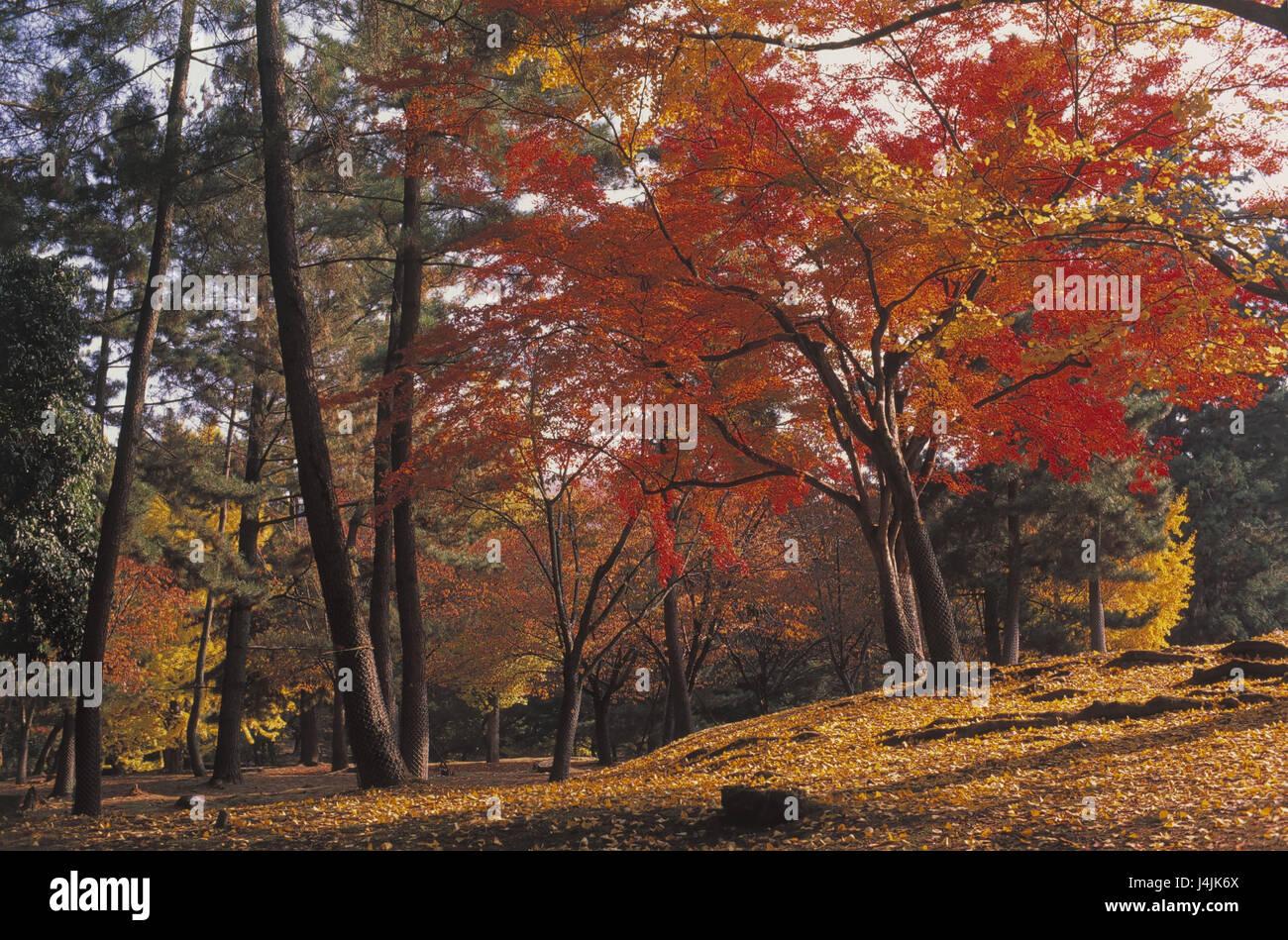 Japan, Nara, autumn wood Asia, Eastern Asia, island state, Nippon, Nihon Koku, Honshu, wood, plants, trees, broad Stock Photo