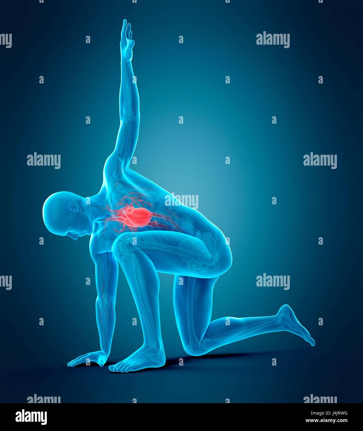 Anatomy of person kneeling with arm raised, illustration Stock Photo ...