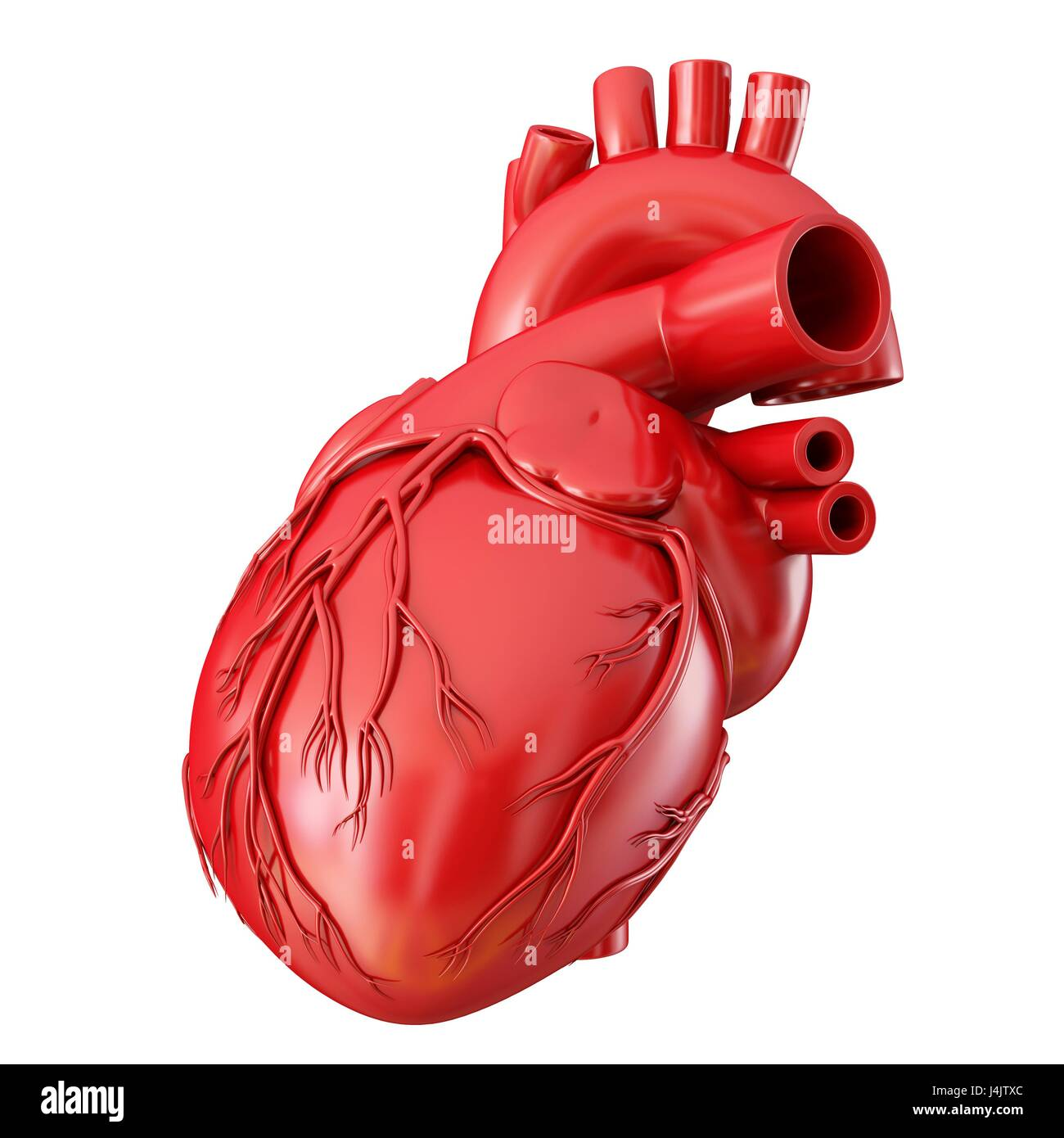 3d Illustration Anatomy Human Heart Cut Out Stock Images Pictures