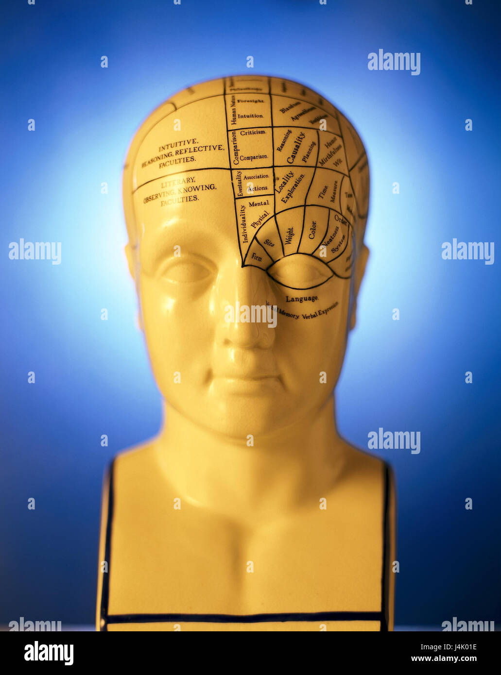 Medicine, model head, marks, brain functions medicine, science, head, model, show model, teaching model, head model, - Stock Image
