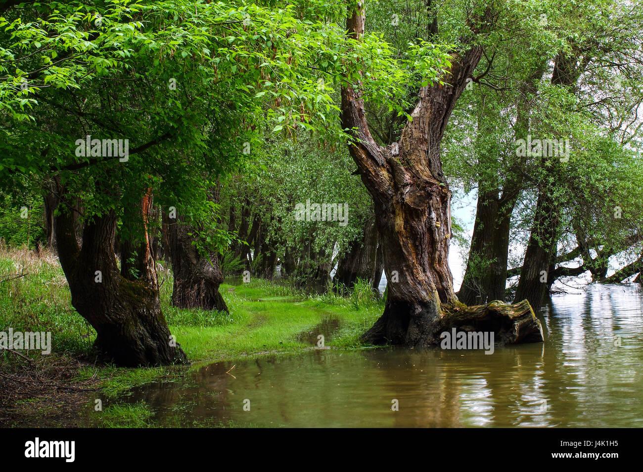 Flood basin - Danube Hungary - Waterside - Stock Image