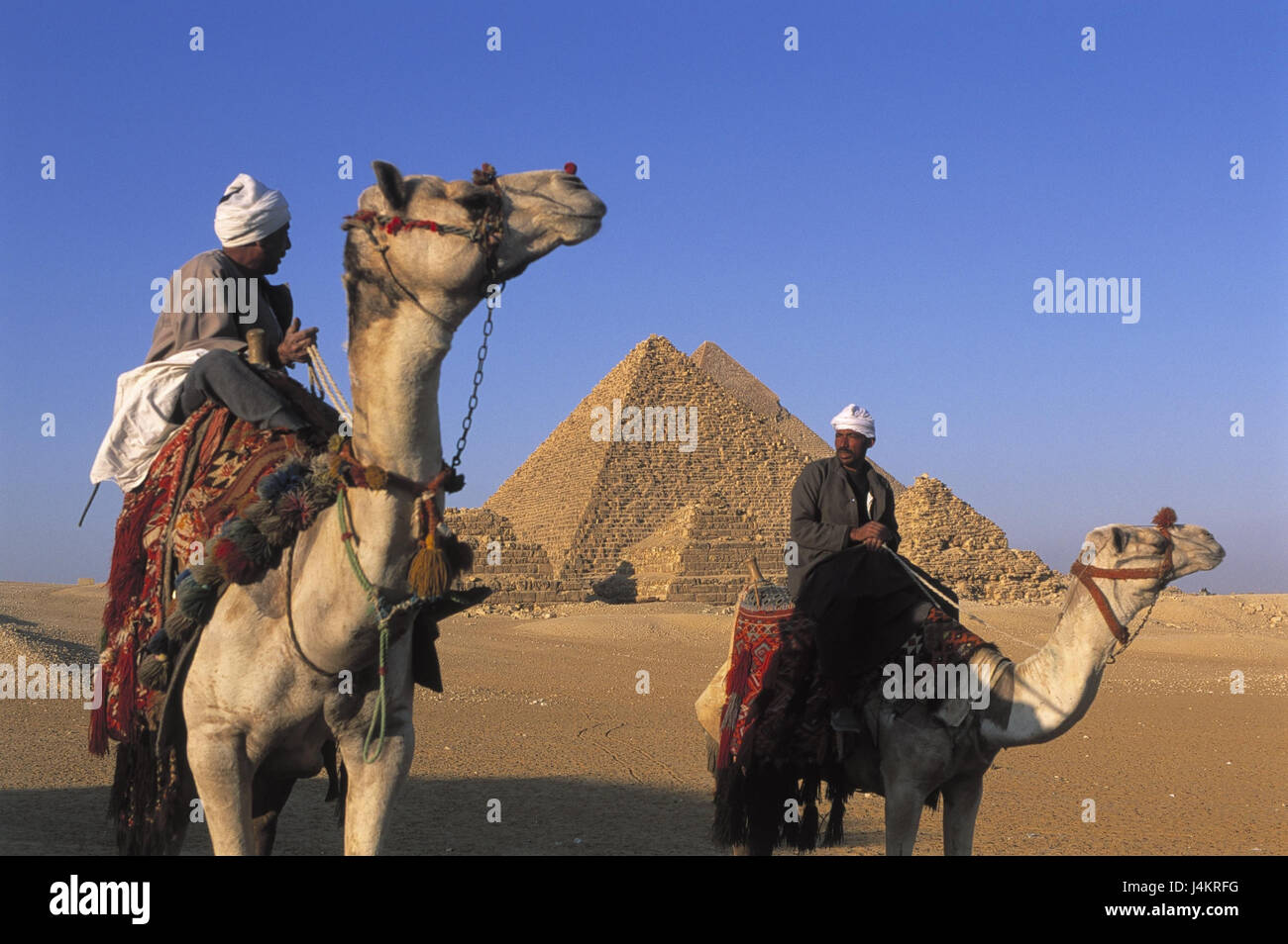 Egypt, Gizeh, pyramids, camel bleeds outside, Africa, East, Giseh, Gise, Giza, Al-Giza, El-Giseh, pyramids, place - Stock Image