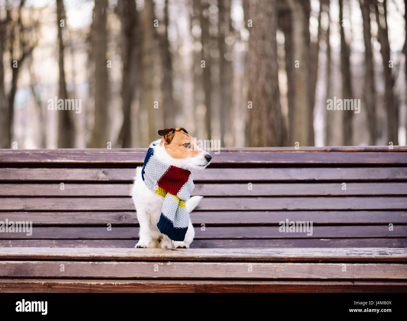 Dog wearing cozy warm scarf sitting on bench at park - Stock Image