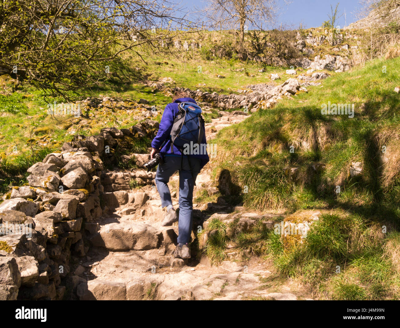 Fit elderly woman climbing the steps to summit Malham Cove Yorkshire Dales National Park Malham North Yorkshire - Stock Image