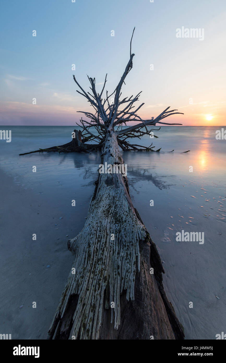 Sunset Trees at Beer Can Island, Longboat Key, Florida, USA - Stock Image