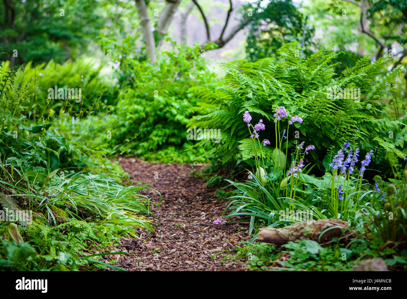 Hortus Botanicus, Botanical garden in Leiden, Netherlands - Stock Image