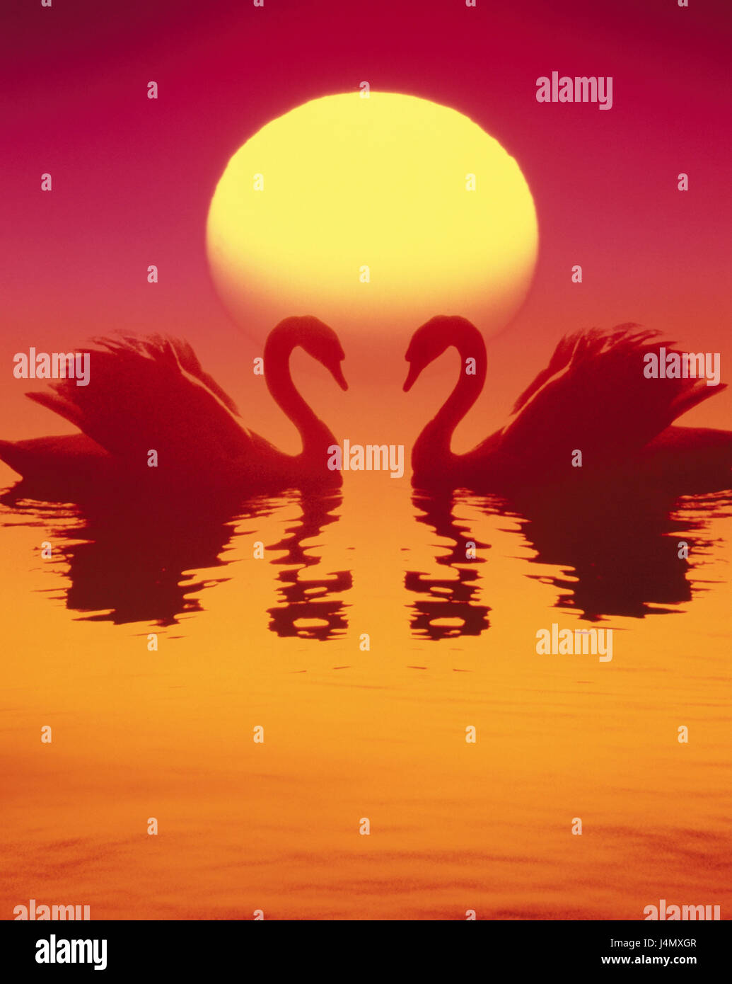Water, swans, sundown, icon, love, romanticism lake, animals, couple, swan couple, towards, necks, heart form, partnership, Stock Photo