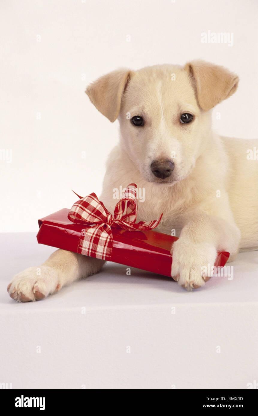 Dog Puppy Present Christmas Present Animal Dog Puppy Brightly Stock Photo Alamy