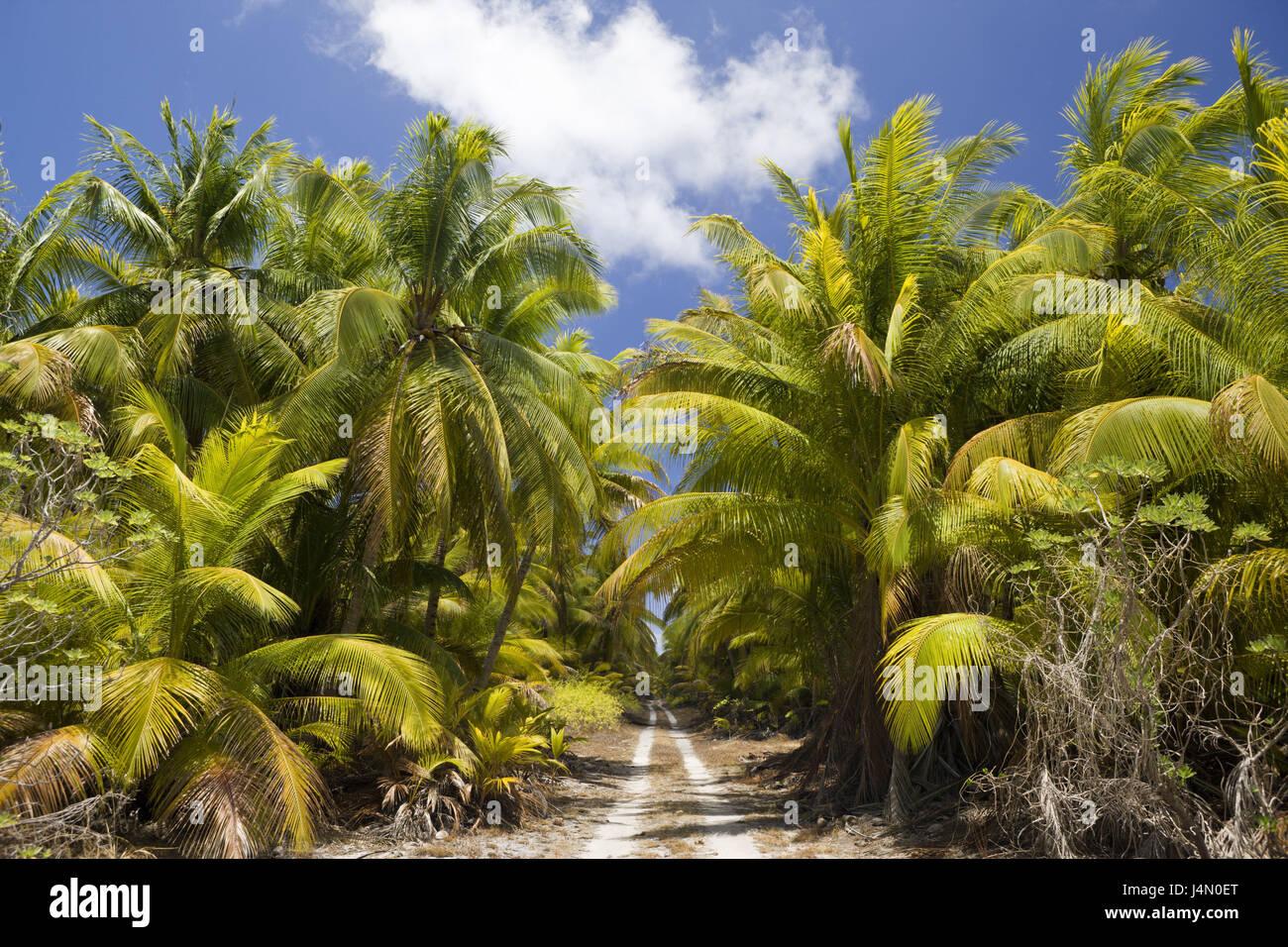 Coconut trees, Bikini, Marshall islands, - Stock Image