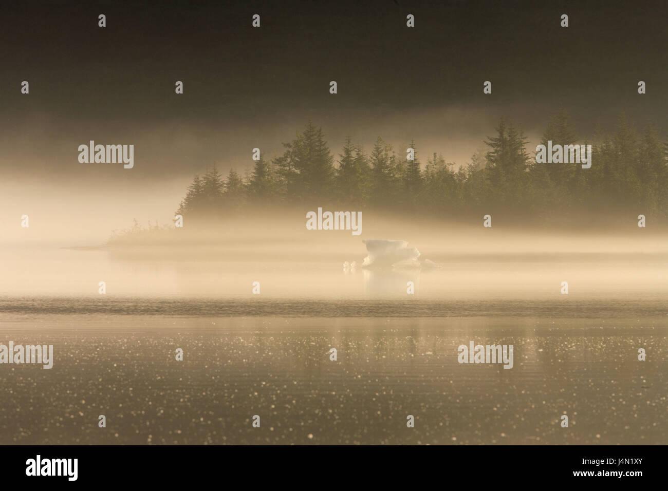 The USA, Alaska, Juneau, Mendenhall brine, iceberg, wood, fog, dusk, - Stock Image