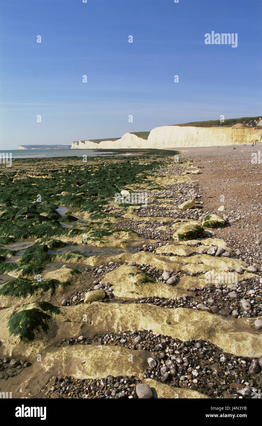 Great Britain, England, Sussex, Eastbourne, Seven Sisters, Beachy Head, rock, beach, algae, - Stock Image
