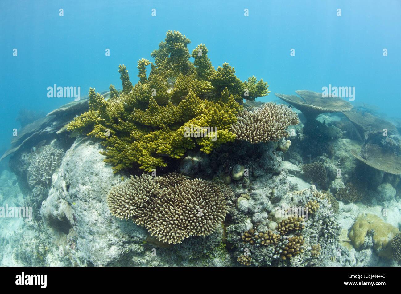 Corals, lagoon, Bikini, Marshall islands, - Stock Image