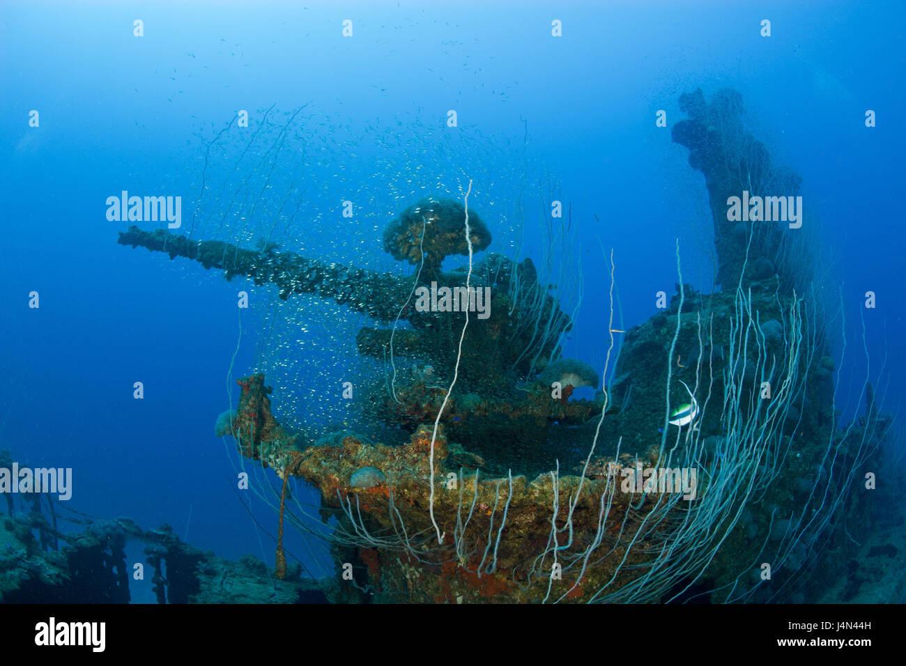 Submarine wreck, USS-Apogon, 5 inches Geschütz, corals, - Stock Image