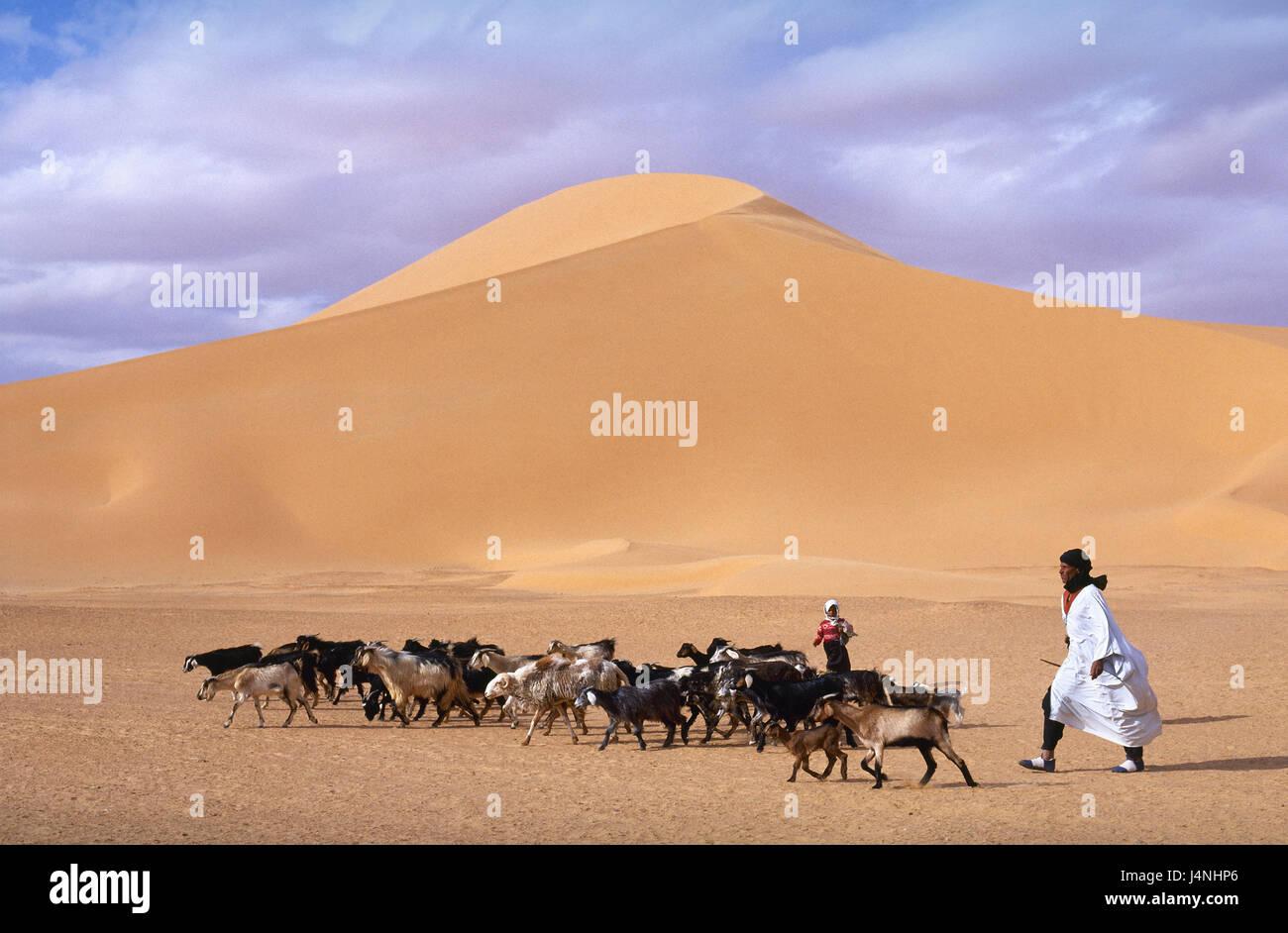 Algeria, Sahara, Sand dunes, goat focuses, shepherds, Africa, North Africa, desert, Sand desert, wild scenery, dunes, - Stock Image