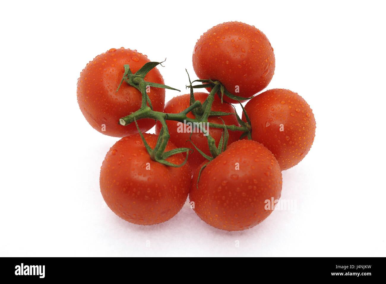 Shrub tomatoes, Solanum lycopersicum, - Stock Image