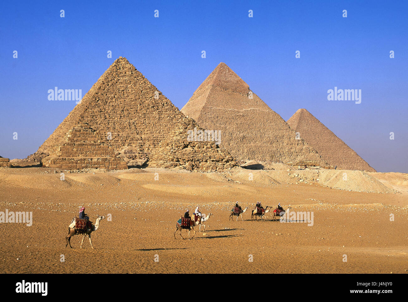 Egypt, Gizeh, pyramids, camel bleeds, Africa, structures, historically, world-famous, famously, landmarks, place - Stock Image