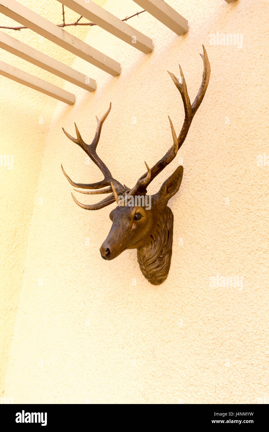 deer head on wall in the yard at the castle Stolzenfels - Koblenz ...