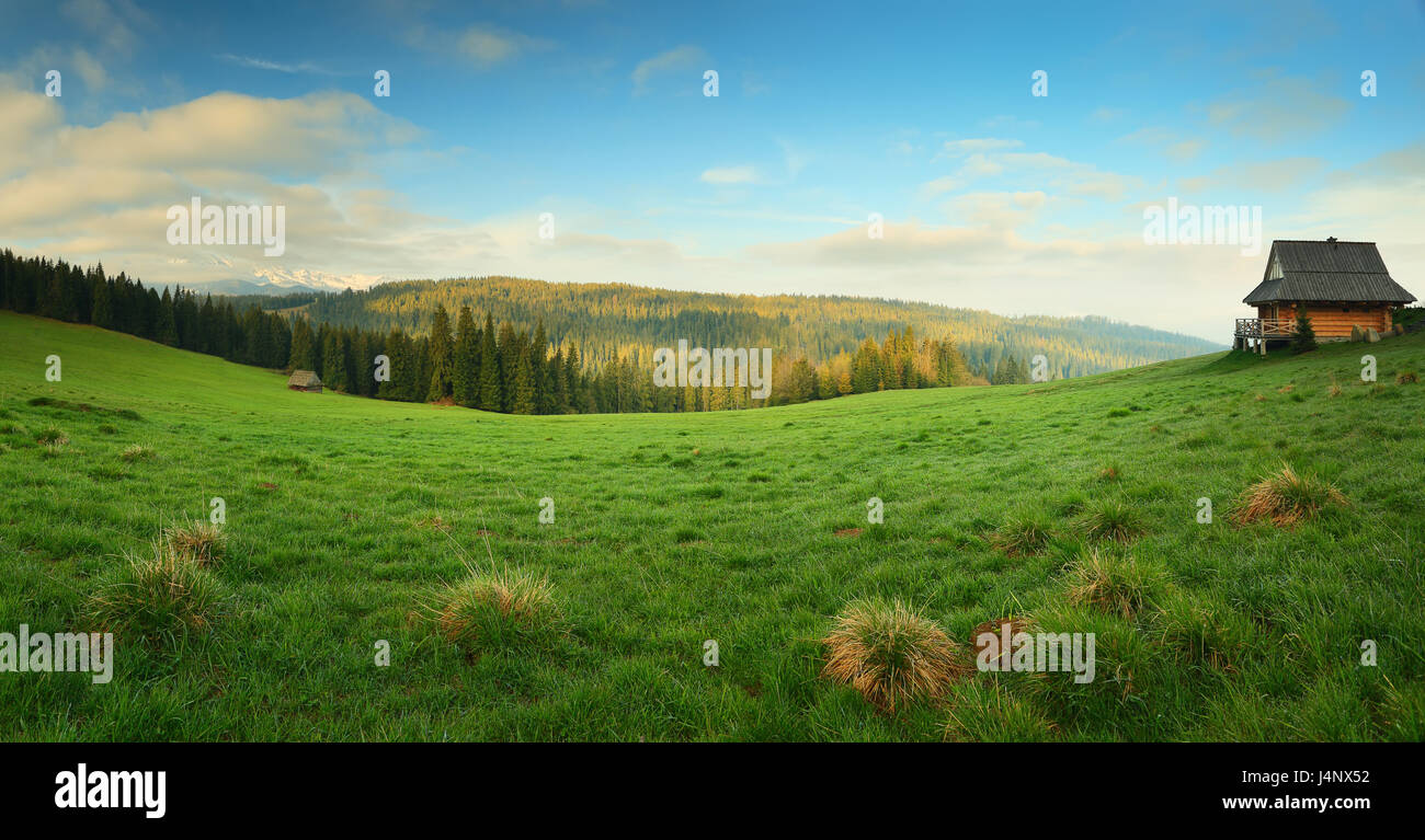 green valley in the morning. blue sky over green mountain meadow