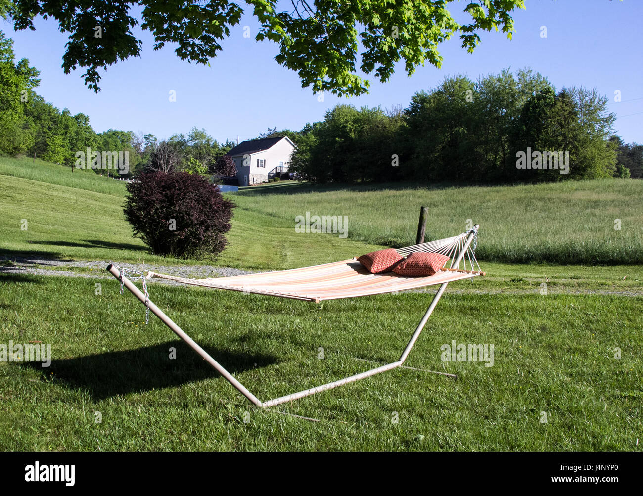 summer and a hammock - Stock Image