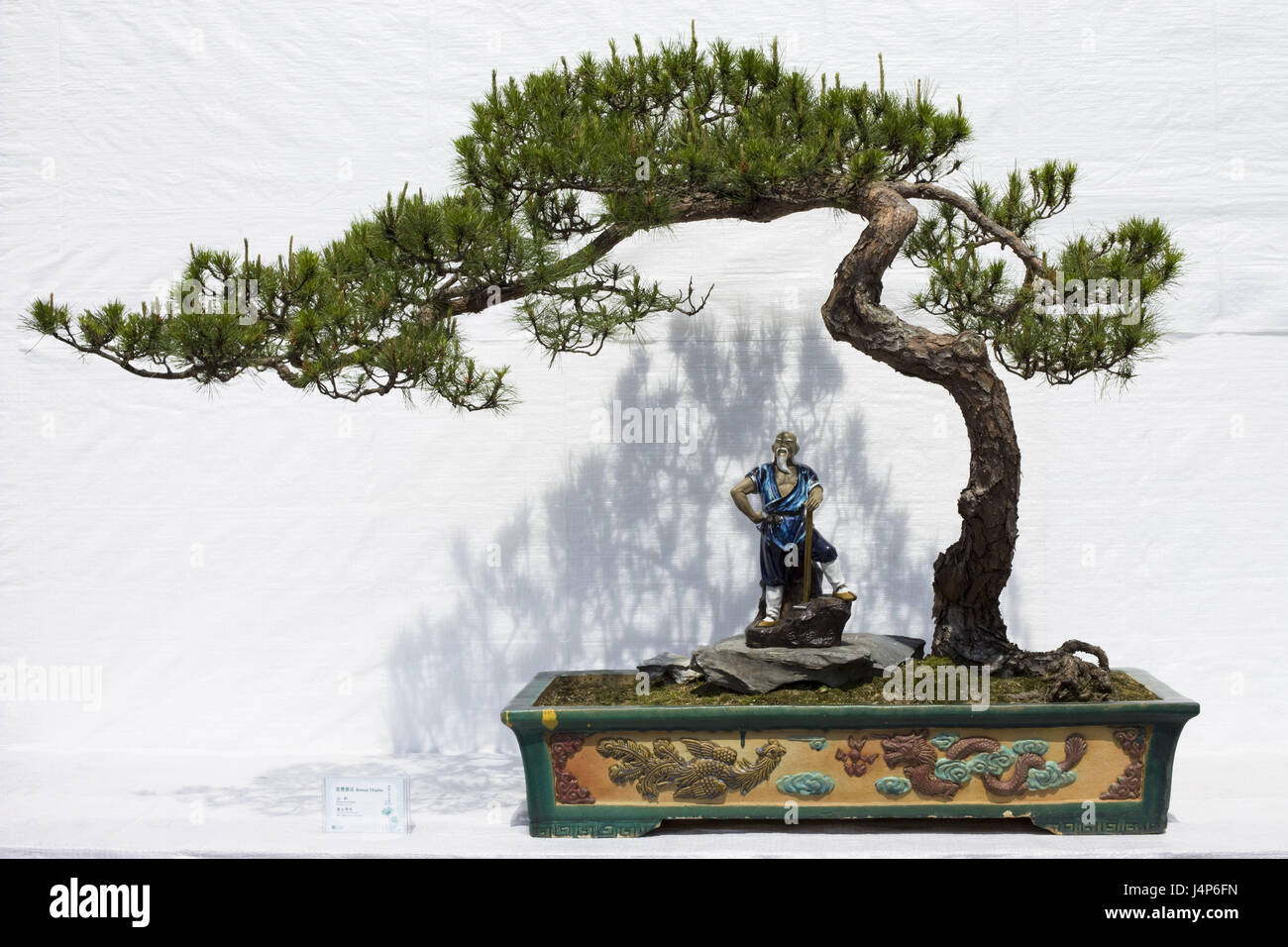 Bonsai Tree Peel Character Dwarf S Tree Tree Conifer Small Stock Photo Alamy