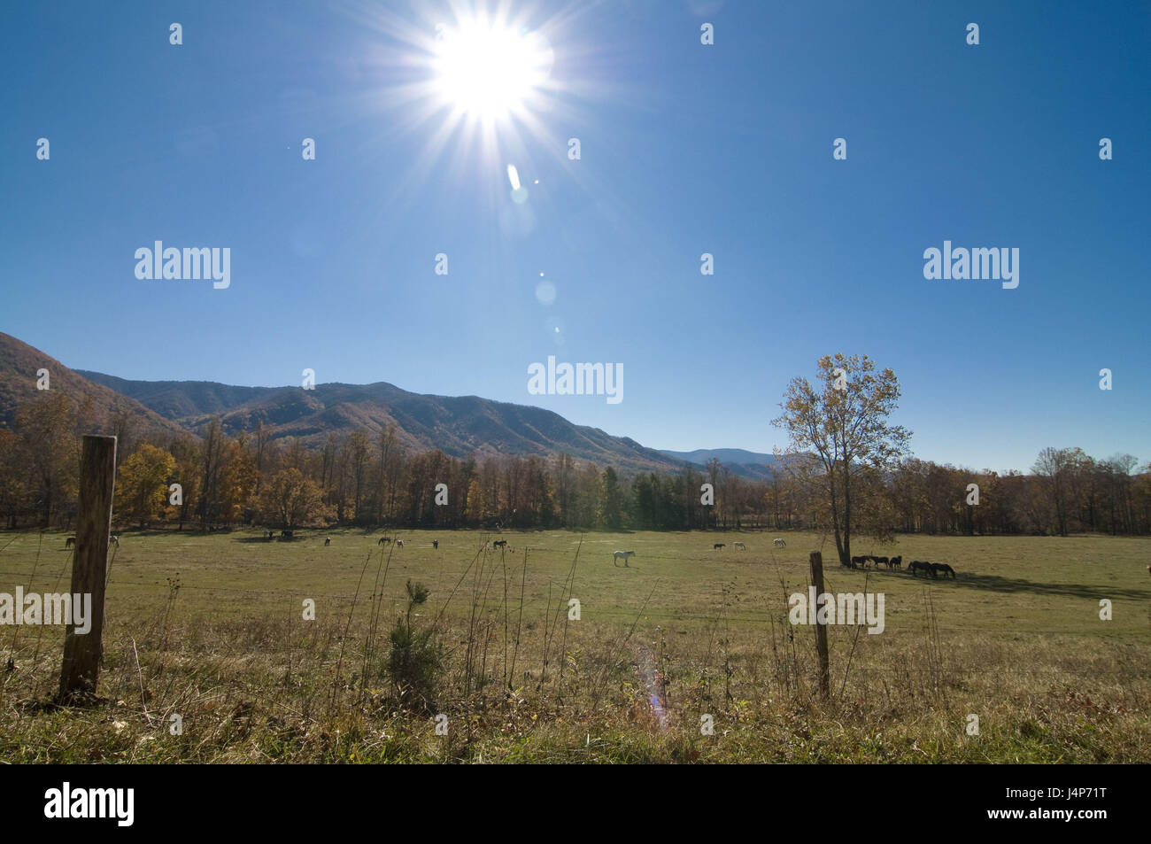 The USA, Tennessee, Great Smokey Nationwide park, pastureland, autumn, the sun, back light, - Stock Image