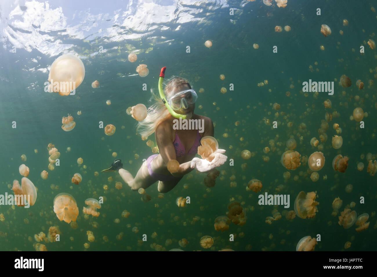 Underwater recording, Schnorchlerin, Mastigias-display screen jellyfishes, Mastigias Papua etpisonii, dream, touch, Stock Photo