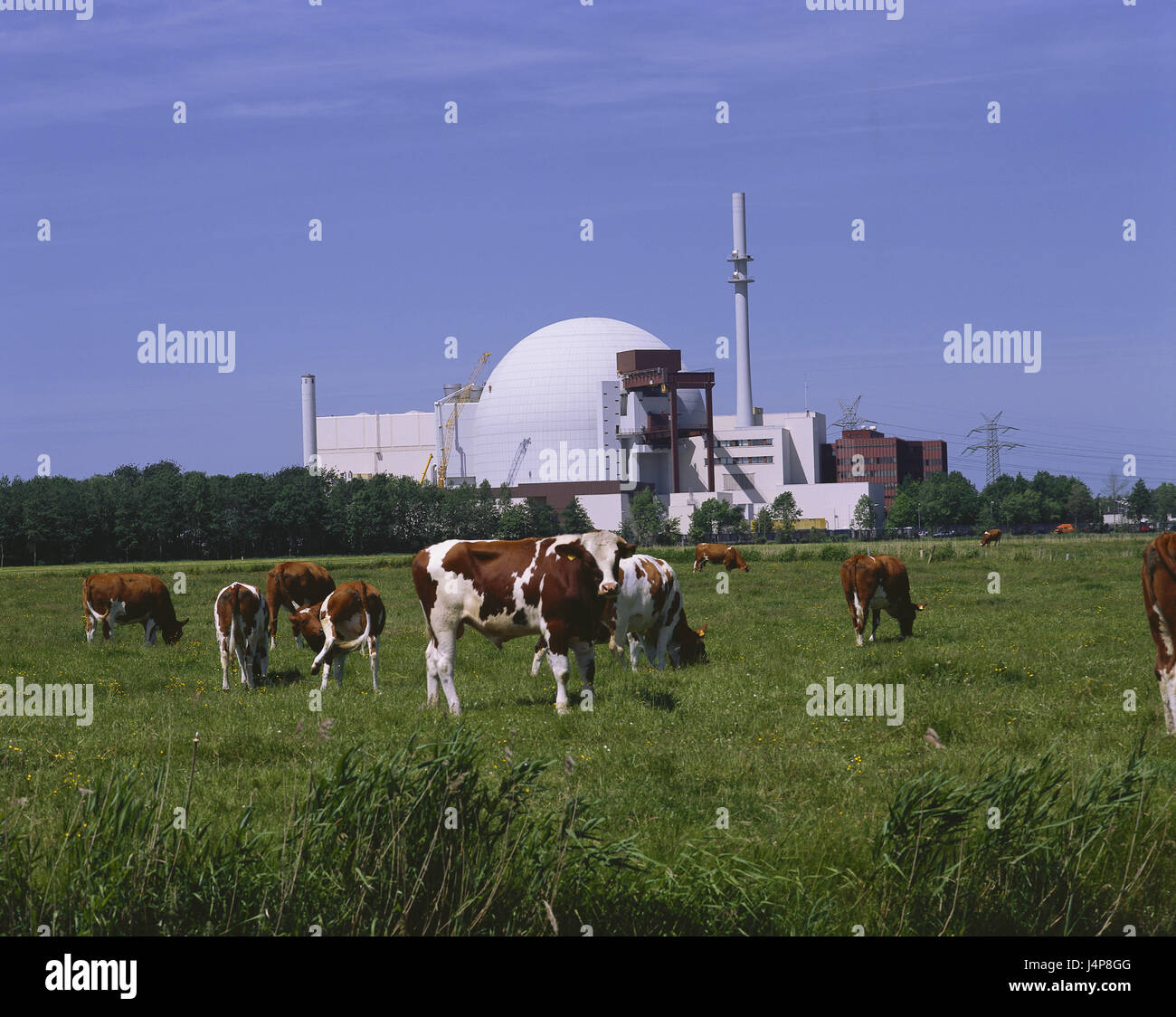 Germany, Schleswig - Holstein, village Brok, nuclear power plant, pasture, cows, energy, power production, current, - Stock Image