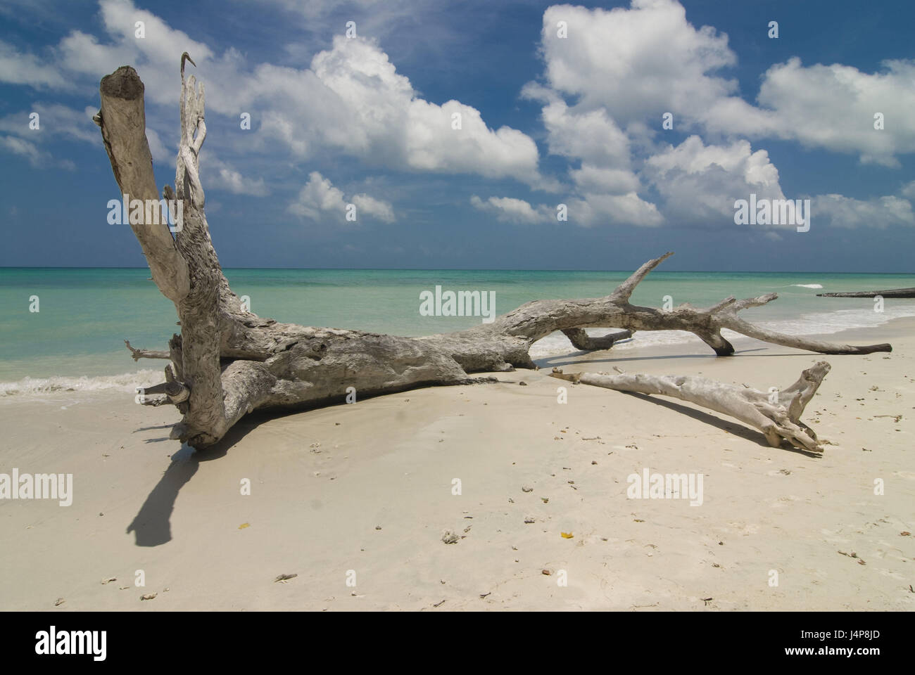 Root, sandy beach, turquoise, Indian ocean, Havelock Insel, Andamanen, India, - Stock Image
