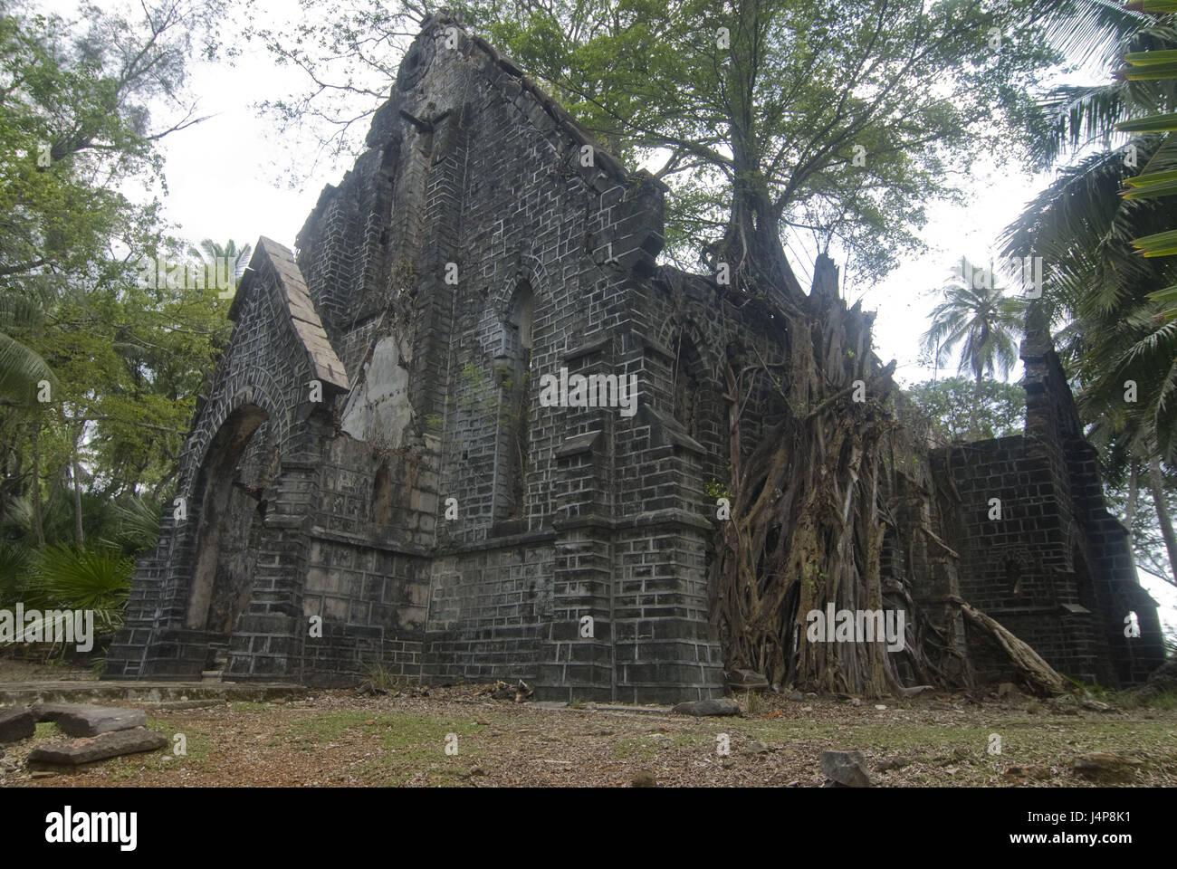 Tree, tremendously, roots, grow around, building, ruin, horse island, Andamanen, India, - Stock Image