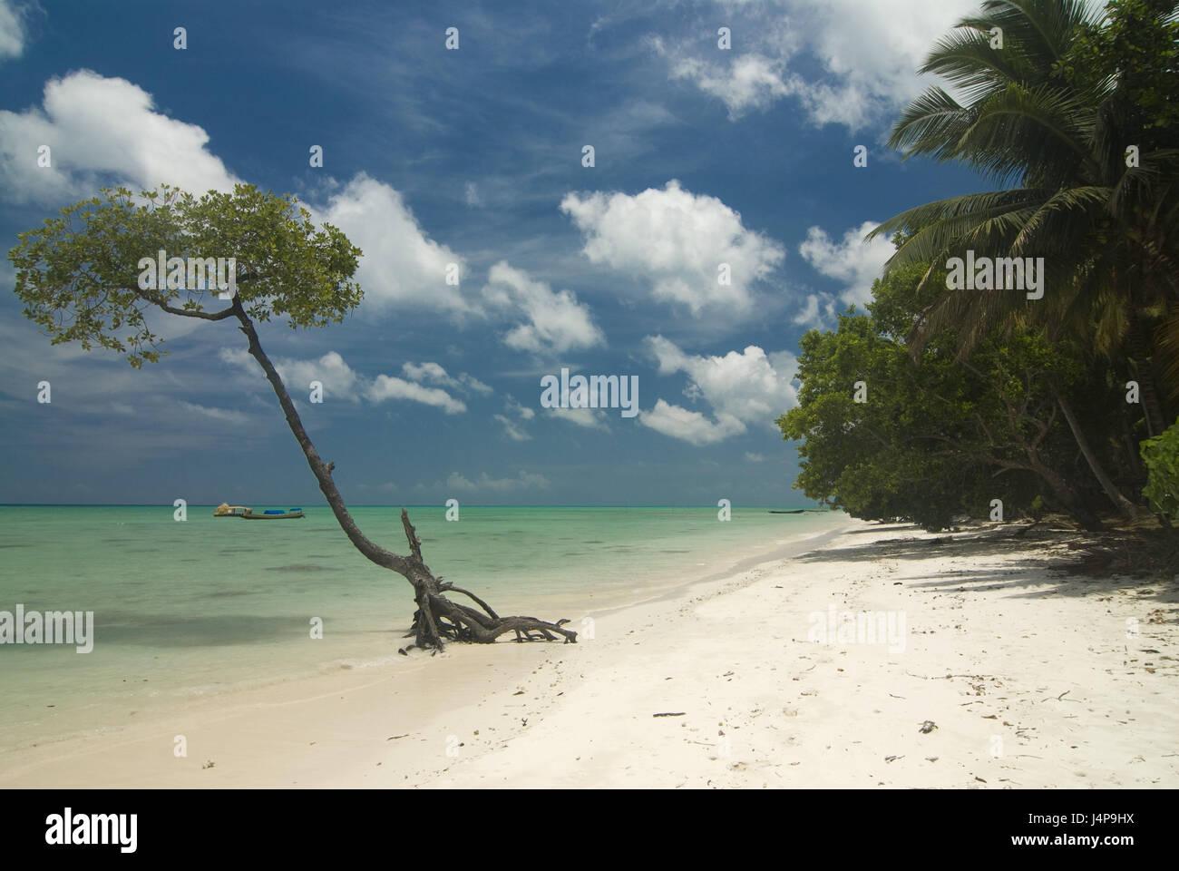 Sandy beach, tree, Indian ocean, Havelock Insel, Andamanen, India, - Stock Image