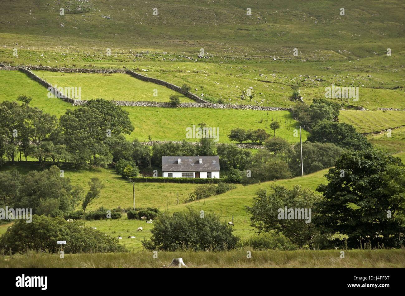 Ireland, Connacht, county Mayo, farm, - Stock Image