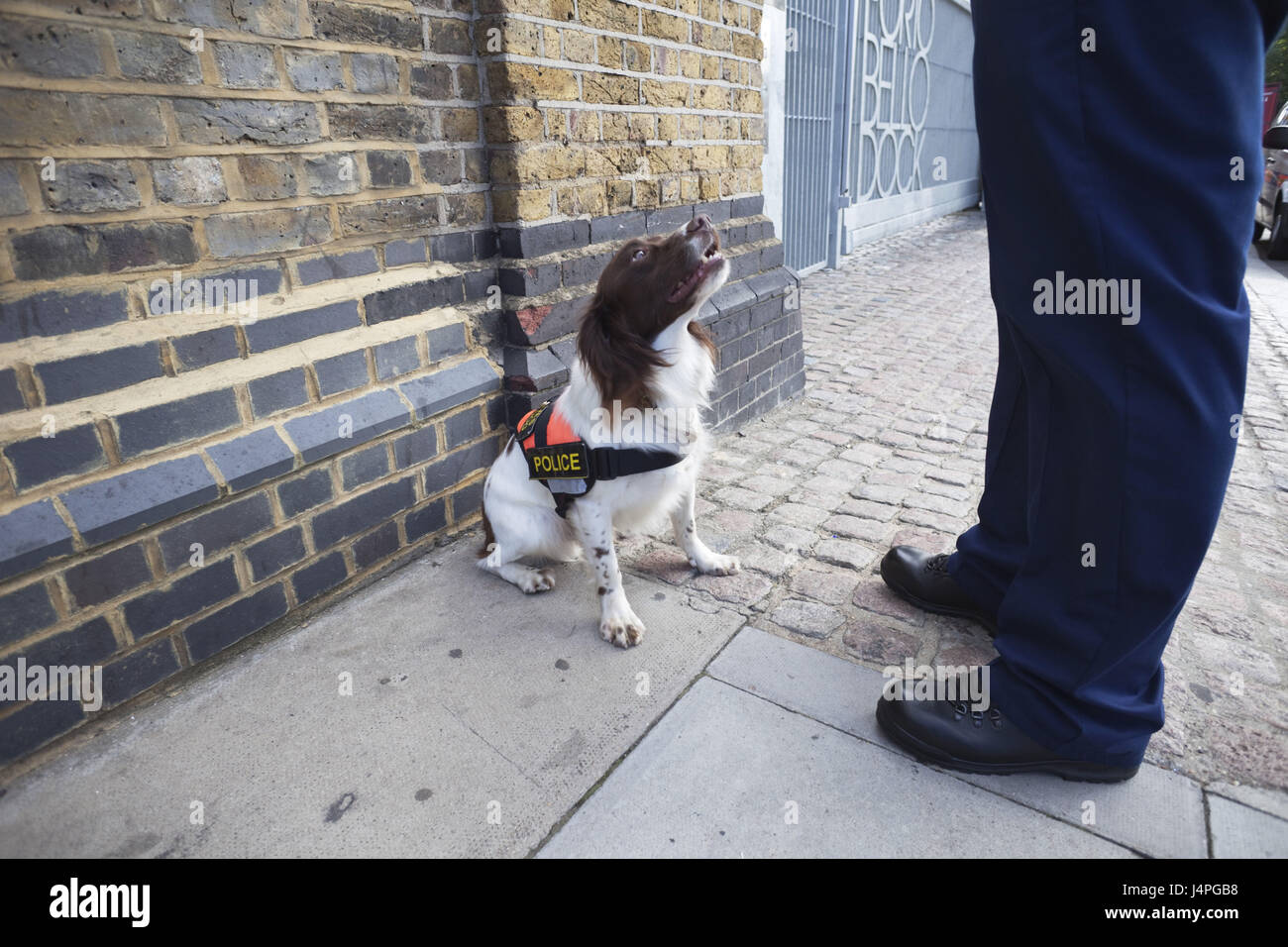 Great Britain, England, London, explosive search dog, man's bones, - Stock Image