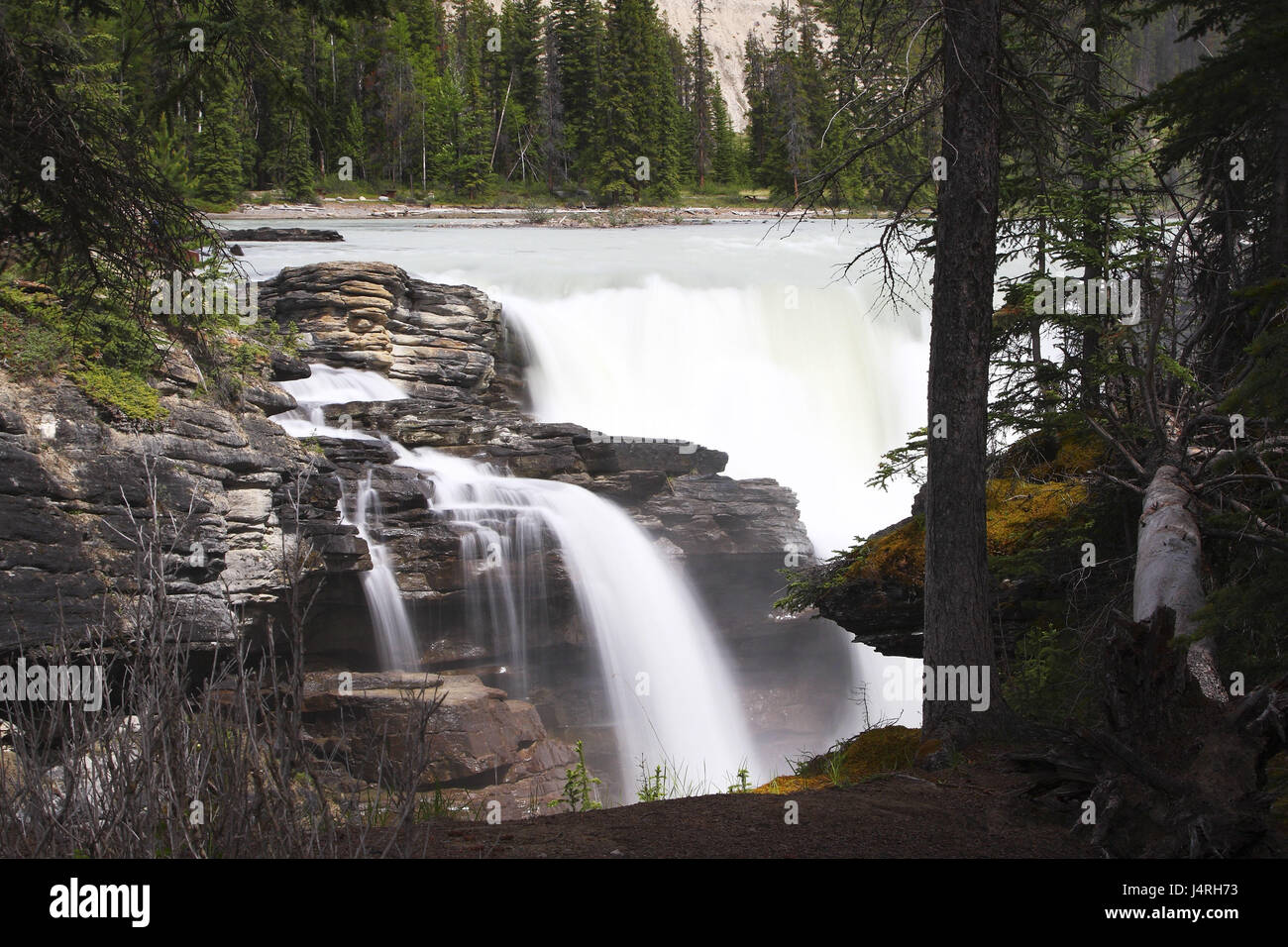 Flux, waterfall, long time exposure, gulch, wooded, Canada, province, Alberta, Jasper National Park, Rocky Mountains, - Stock Image