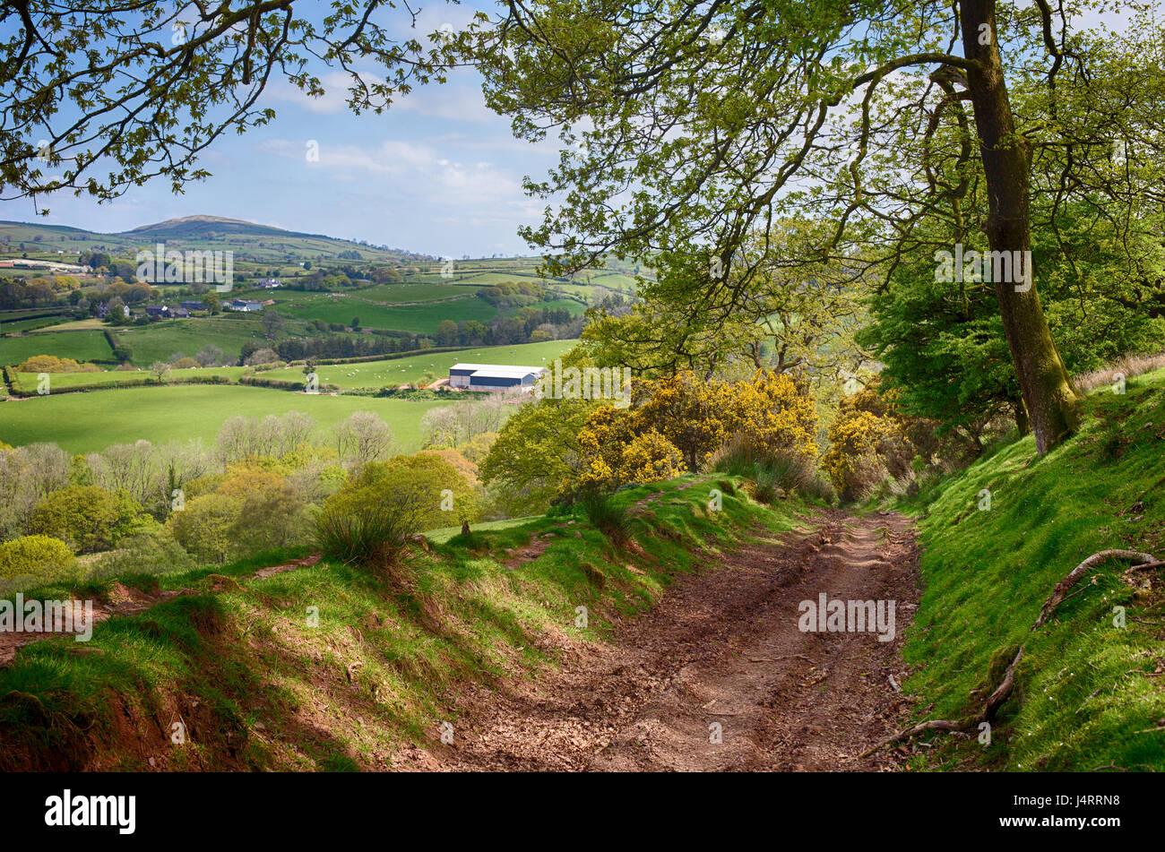 A Wooded Track on the BEacons Way Through Beautiful Countryside in Carmarthenshire, Wales, UK - Stock Image