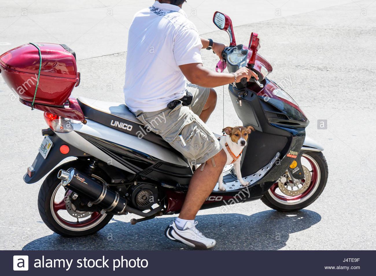 Miami Beach Florida Hispanic Man Motor Scooter Dog Jack Russell