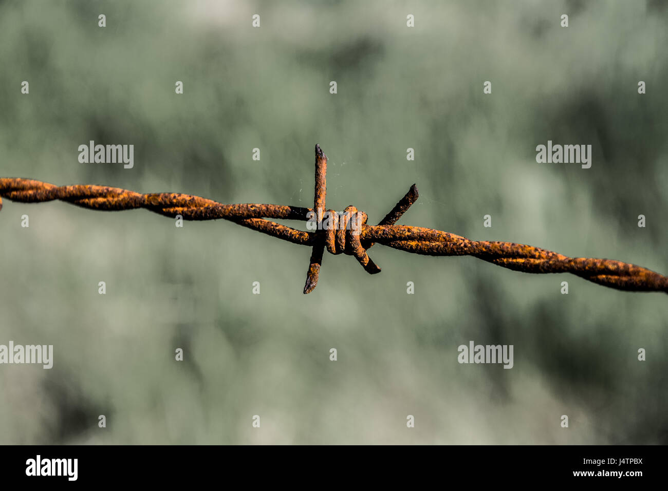 Rusty Barbed Wire - Wiring Diagram