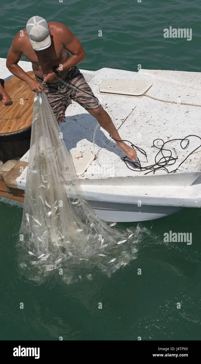 Smalle Kast Wit.Fishing For Bait Using A Cast Net From A Small Boat On The Gulf Of