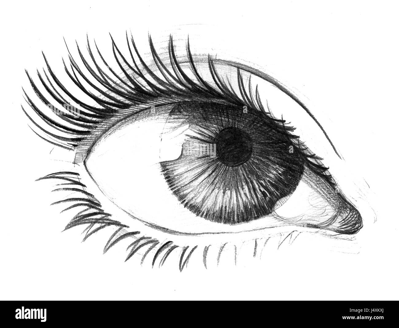 Eye Sketch Cut Out Stock Images Pictures Alamy