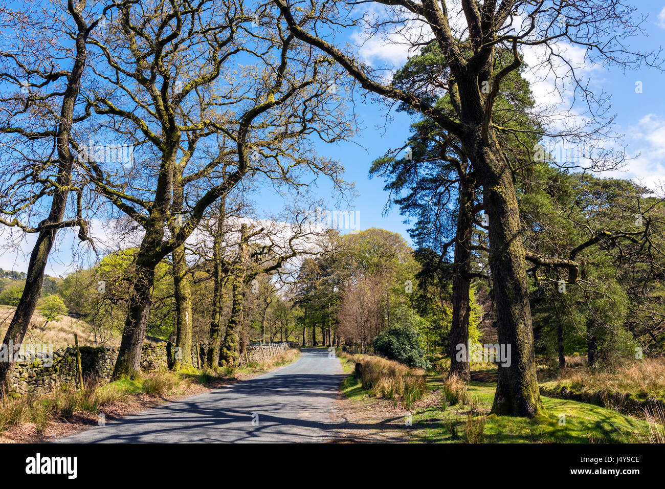 Forest of Bowland. Road alongside the River Marshaw Wyre in the Trough of Bowland, Lancashire, England, UK - Stock Image