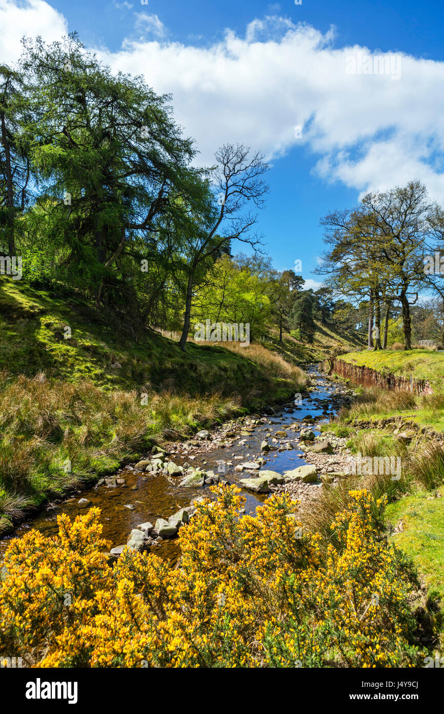 Forest of Bowland. River Marshaw Wyre in the Trough of Bowland, Lancashire, England, UK - Stock Image