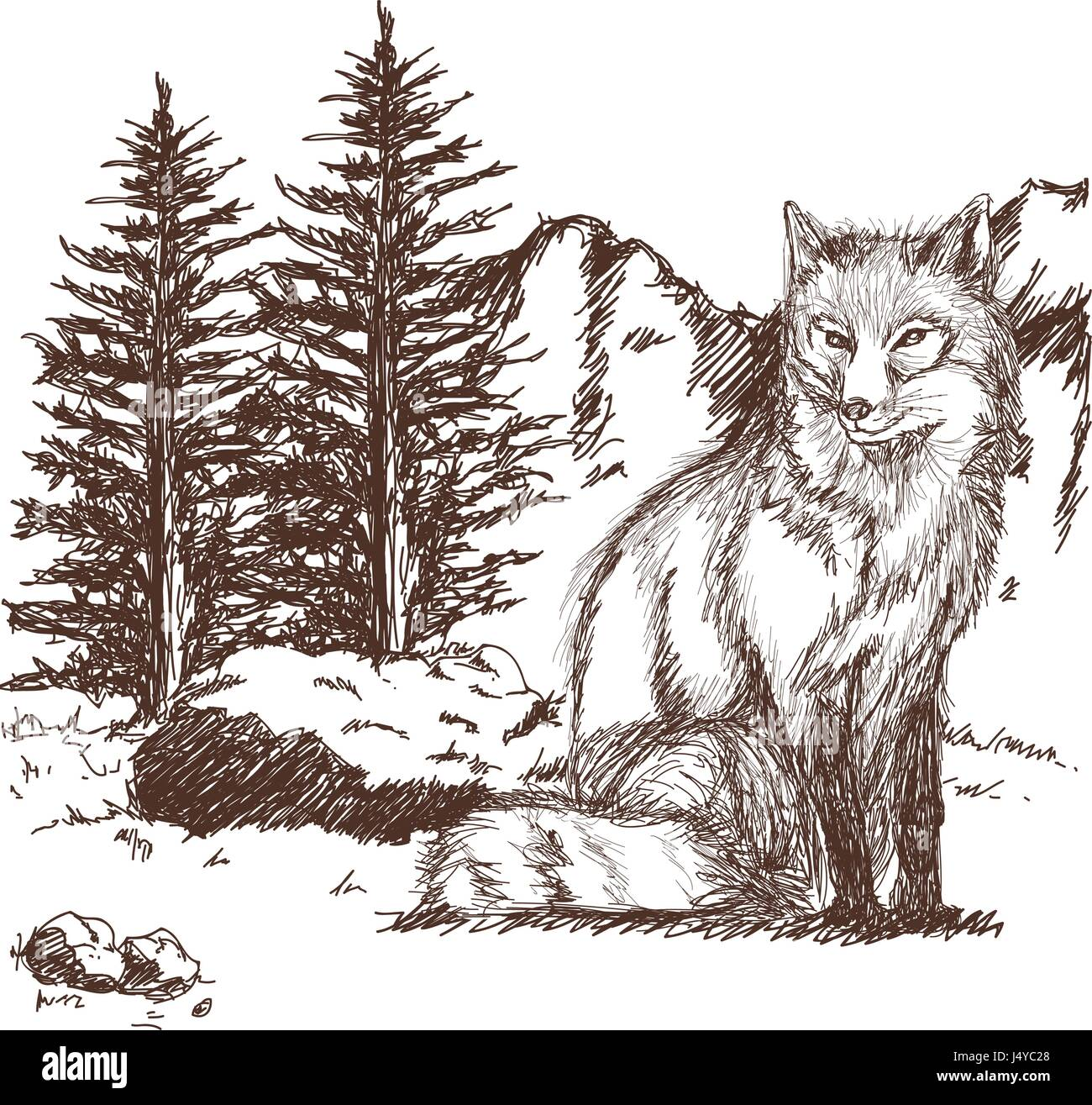 wolf wildlife animal image is hand drawn. pencil sketch of wolf landscape Stock Vector